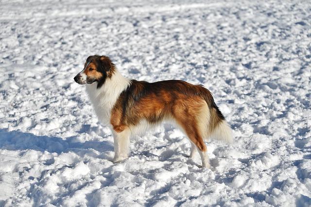Starostlivosť o vášho psíka v zime