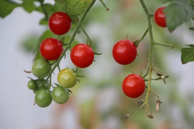 Ako si dopestovať ovocie, zeleninu a bylinky v byte